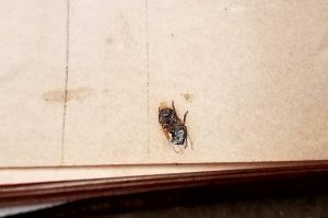Insect, Free Library of Philadelphia, Lewis E 238, fol. 64V.
