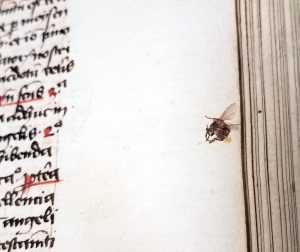 Insect, Free Library of Philadelphia, Lewis E 43.